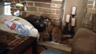 cats Meeting Babies for the FIRST Time . Their Reactions so cute