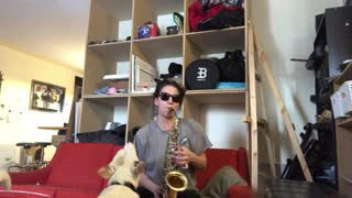 Dog hilariously howls along to owner's band practice