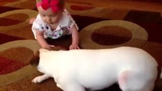 dog teaches baby crawl
