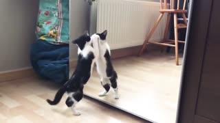 Cat funny moment Mirror