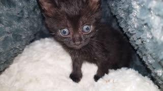 balck Cat animal kitten kitty eye gray nature