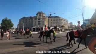 Urban Horses Long Sleeve North American Marcher 2021 Animal World