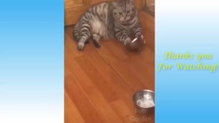 Cat Plays Bowl