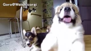 DOGS emotional reaction to being reunited blind dog amaZING AND STYLISH