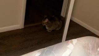 My cat's laser beam