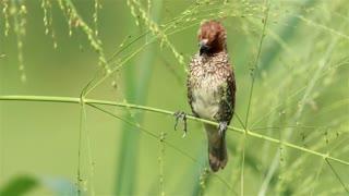 Bird climbing on wildflowers - With great music