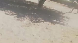 Horses taming