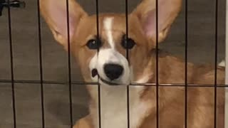 Dog's Sad Face is Impossible to Ignore
