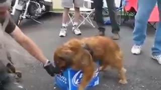 Cachorro com ciúmes kkkk