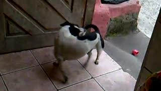 dog going down round