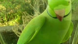 funny cute green parrot