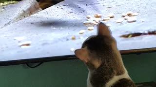 Cat Tries To Catch TV Rat