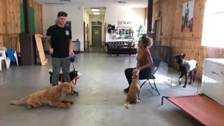 training your dog! Leash reactive dog training