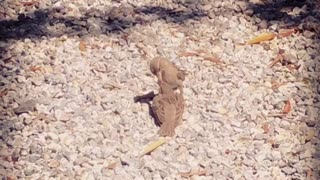 Birds Sparrow Bird Feeding Cute Animals Pure Love