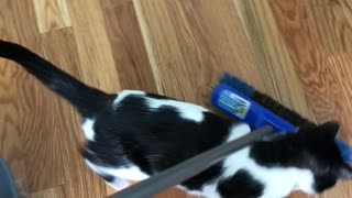 Adorable Foster Cat Helps out with Chores