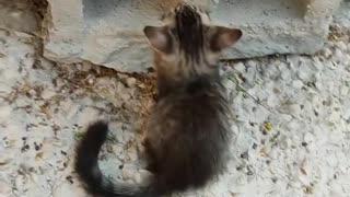 cute little cats - watch now