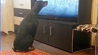 Funny dog workout