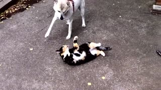 Funny dog and cute puppies