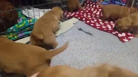 So cute!! Love the vicious puppy barking lol