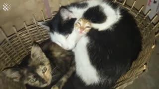 Adorable, Cute & Hilarious Cat Viral Videos