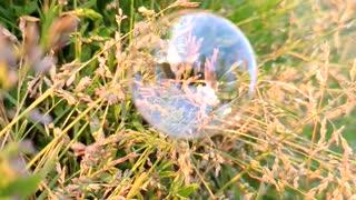 Soap bubble in the grass