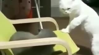 The cats are fighting. White and dark cat
