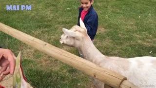 Super Funny Moments Human and Animals Fails scene 1