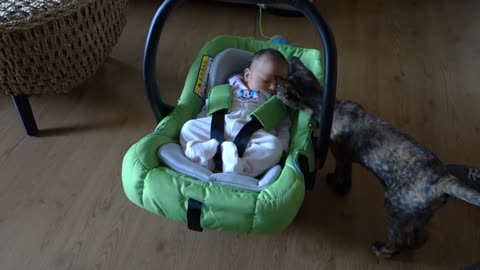 Cats meeting babys for the first time