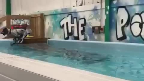 Dog takes a swimming lesson
