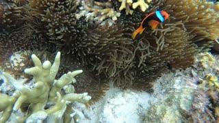 A diver finally found Nemo