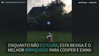 Cães se divertem ao brincar com bexiga