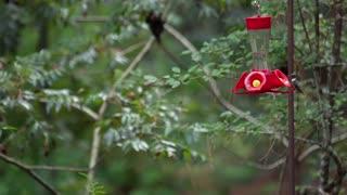 Hummingbirds Kleb Nature Preserve