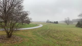 Drizzlely Friday in Kentucky but the crows love it