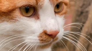 Cat video cat my cat