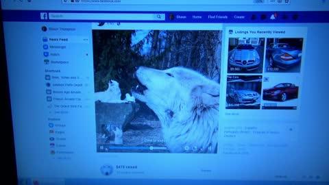 Beagle Anxious Over Wolf