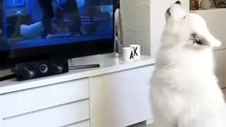 Dog Barking Nicely
