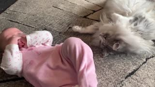 This cat and baby become best friends!