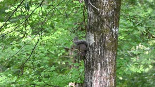 The morning squirrel.
