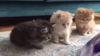 Adorable cats watch movie