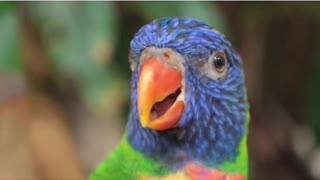 More Beautiful parrot