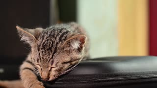 Sleeping cat style