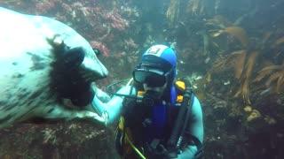Christmas Special Dive - Part 2