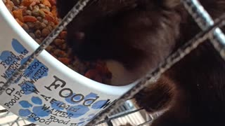 Meow Eating ♥️