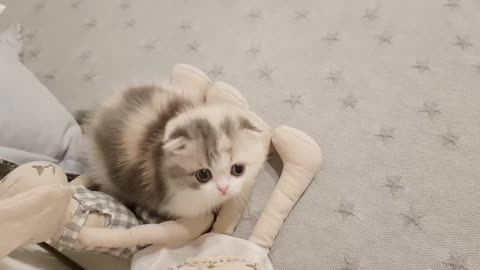 A cute mini cat