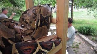 Kids touch Massive Snake