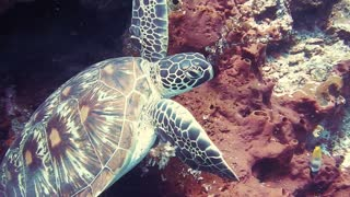 cute animals under the water 2