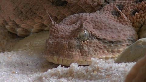 Sweet lizard at house ' freaking eye look '