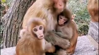 Baby monkey and their mother