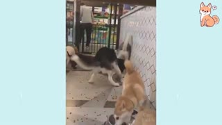 Some More Smart, Adorable And Cute Little Puppies!