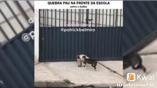 a briga de gatos por comida